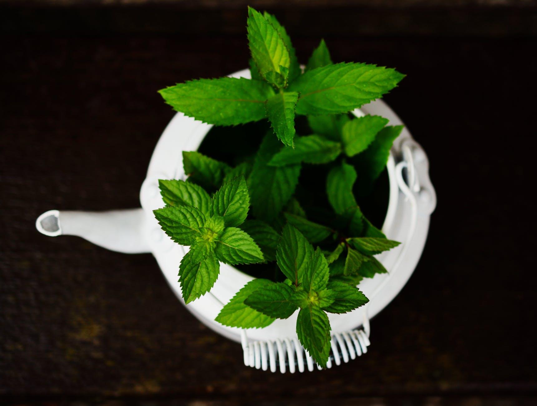La fitoterapia es la ciencia que se encarga de aplicar el uso de las plantas medicinales para fines terapéuticos. Como toda ciencia, tiene su propia historia que vale la pena conocer.